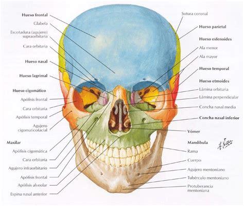 imagenes netter pdf atlas de anatom 237 a humana netter s 60 00 en mercado libre