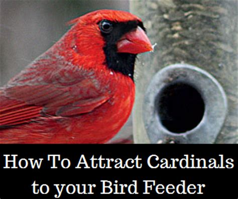 best 28 how to attract birds to your bird feeder 50