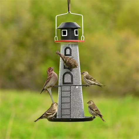 best finch bird feeders birdcage design ideas