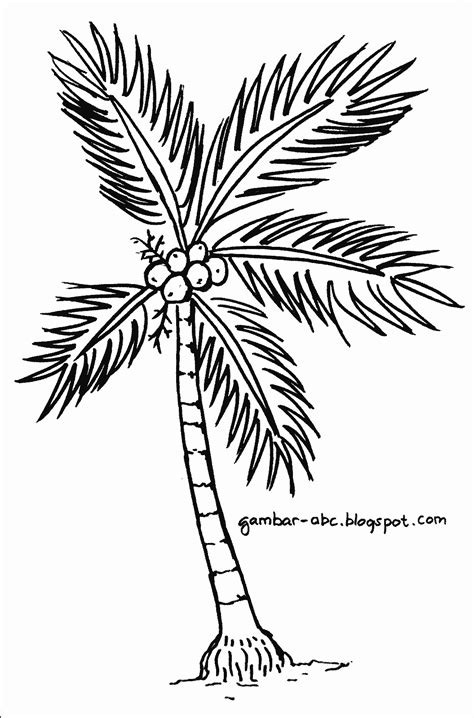 pohon kelapa contoh gambar mewarnai
