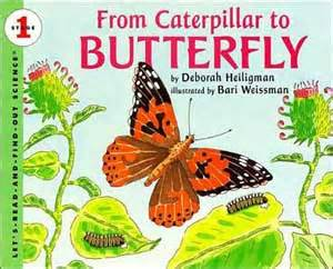 the white butterfly s journey books from caterpillar to butterfly deborah heiligman