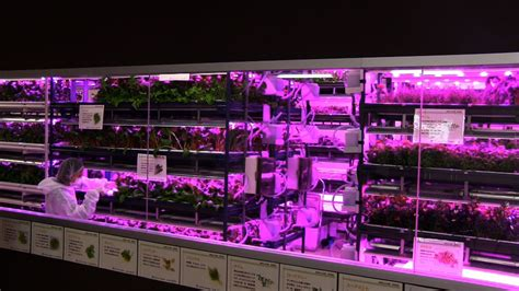 horticultural led grow indoor garden with led grow lights aerogarden ultra led
