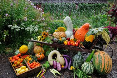 vegetables ark food ark sidebar grow your own heirlooms pictures
