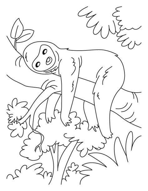 sloth animal coloring pages 187 coloring pages perezoso para colorear imprimir y pintar