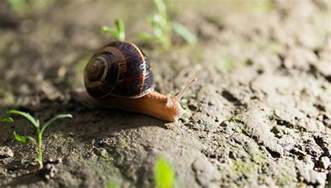 Where Can You Find Snails In Your Backyard stop coke use it for this instead