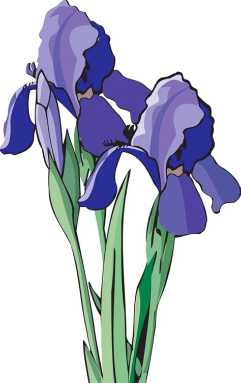 arts clipart purple iris flower clip cliparts