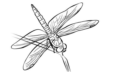 coloring page dragonfly dragonfly coloring pages gekimoe 35880