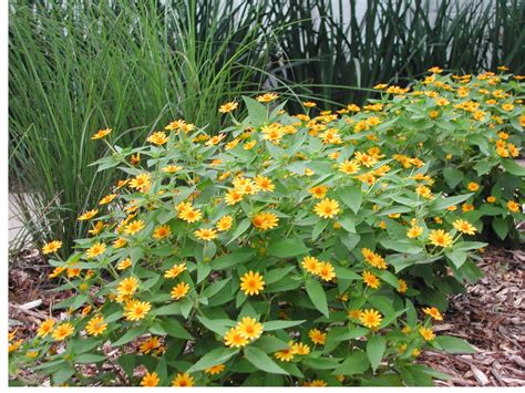 garden resources and trends fall blooming perennials plant drought tolerant trees shrubs perennials this fall
