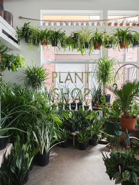 awesome plant stores     interior