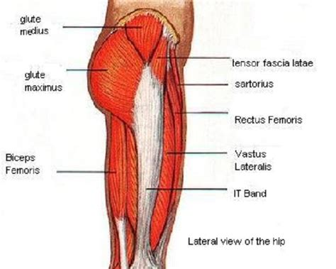 diagram of back muscles search results for back diagram calendar 2015