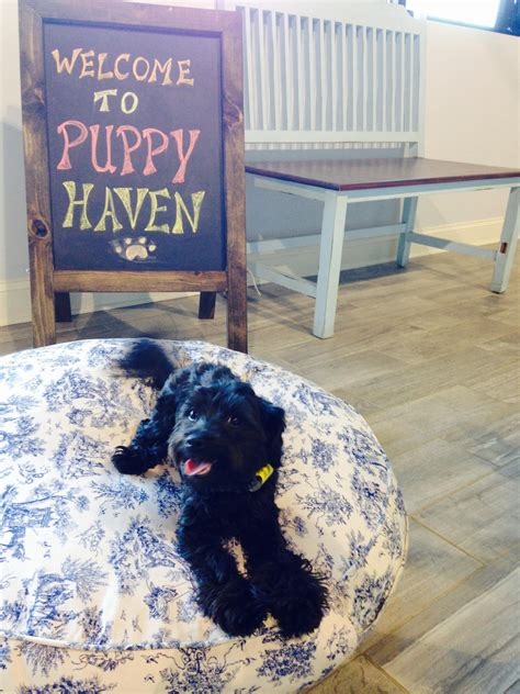 puppy brookhaven about daycare brookhaven atlanta doggie daycare