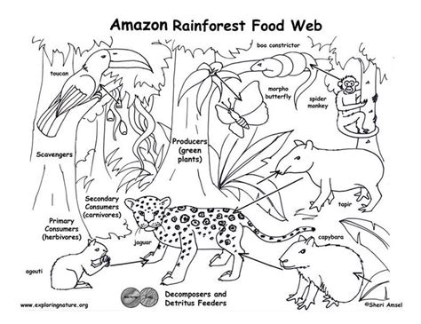 rainforest coloring pages preschool 17 best images about preschool rainforest on pinterest