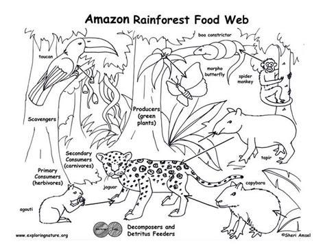 rainforest coloring pages kindergarten 17 best images about preschool rainforest on pinterest