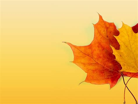 Autumn Ppt Background Powerpoint Backgrounds For Free Free Fall Powerpoint Backgrounds