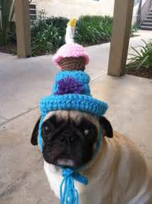 Pin funny pugs with hats on pinterest
