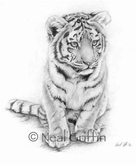 tiger cub tattoo designs best 25 tiger ideas on tiger tatto