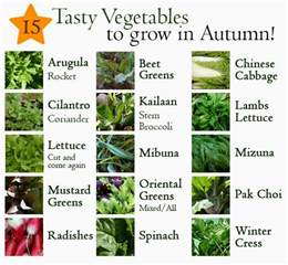 15 vegetables you can grow in autumn in the garden or