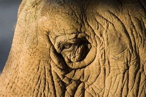 Mimis Elephant mimi the 7th oldest elephant in a american zoo was humanely euthanized tuesday huffpost