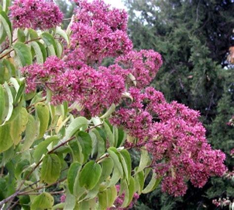 a flowering shrub garden