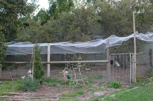 Fly Repellent For Backyard Plants For The Chicken Run Green Change Com