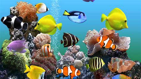 Marine Fish Wallpaper Free
