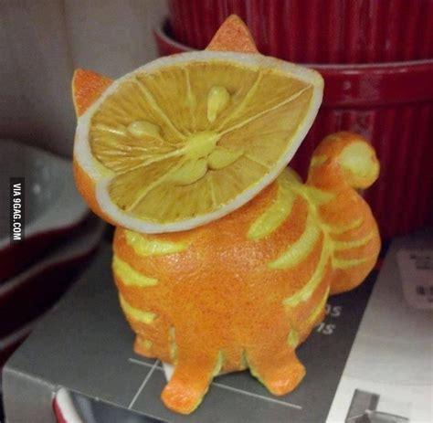fruit 9gag fruit cat 9gag