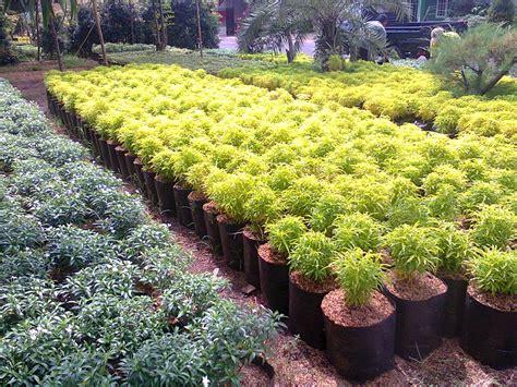Bibit Tanaman Toga jual tanaman obat di medan tanamanbaru