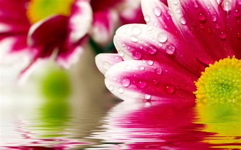 image for flowers flower reflections 4178608 2560x1600 all for desktop