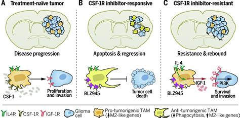 protein 4 1r the tumor microenvironment underlies acquired resistance