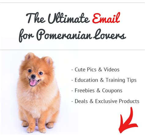 do pomeranian puppies shed how bad do pomeranians shed advice from real pomeranian owners