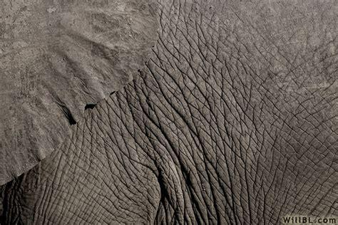 elefantenhaut tapete elephant skin by willbl on deviantart