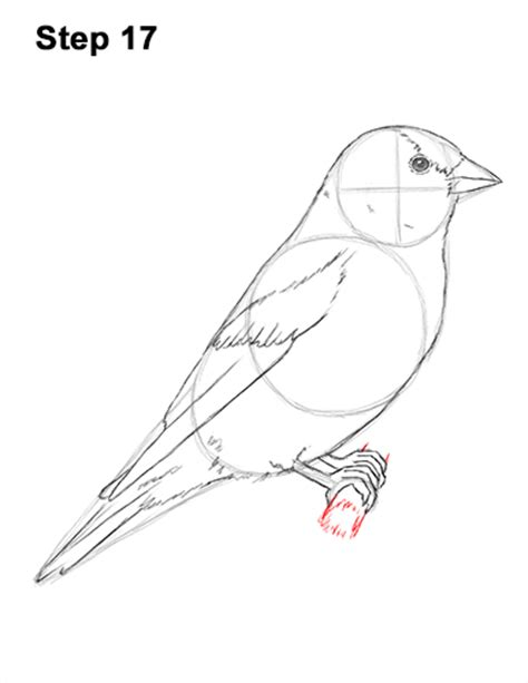 how to draw a goldfinch eastern goldfinch drawing www imgkid the image kid