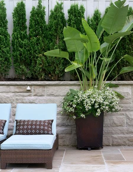 Best Plants For Patios by Nest Outdoor Potted Plants