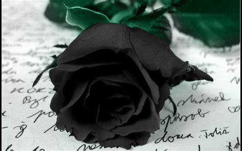 imagenes rosas dark colourful wallpapers black rose