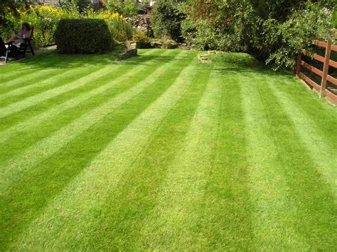 how to grow grass in backyard how to plant grass