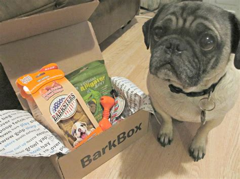 barkbox for puppies january barkbox for small dogs review emily reviews
