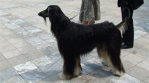 cloning dogs cloning photos