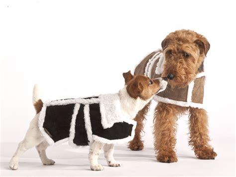 coat puppies best coats in the uk 2013