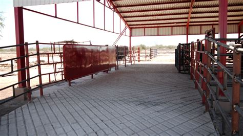 manejo de instalaciones para 8415848722 corrales manejo de ganado bud box 3 suma internacional