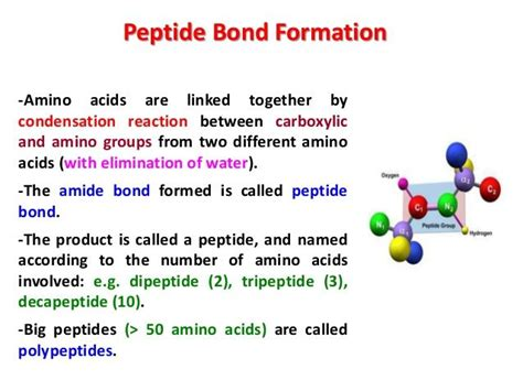 best 25 peptide bond ideas on stop codon