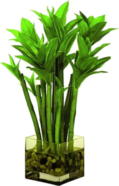 bamboo artifiacl plants bamboo craft photo
