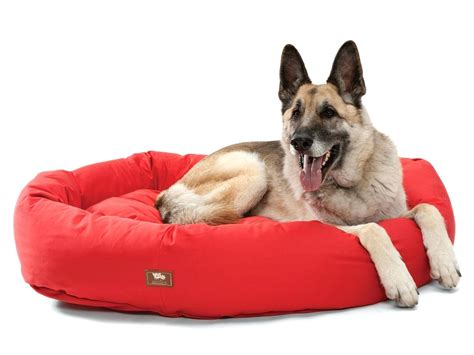 unchewable dog bed unchewable dog beds dog pet cat elevated bed folding