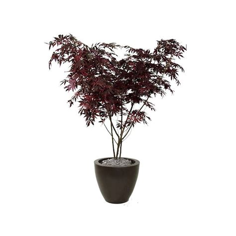 small artificial trees uk uk made artificial trees maple