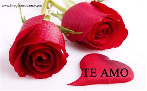 imagenes rosas te amo 14 imagenes de hermosas rosas con frase te amo