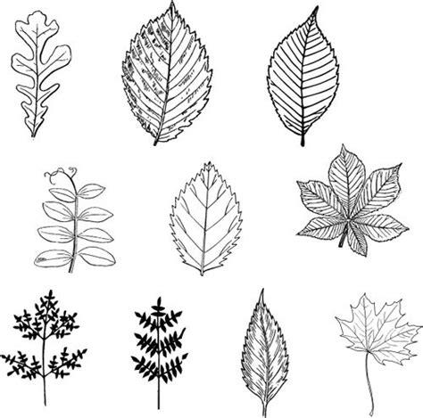 leaf pattern line drawing best 25 leaf patterns ideas on pinterest leaf template