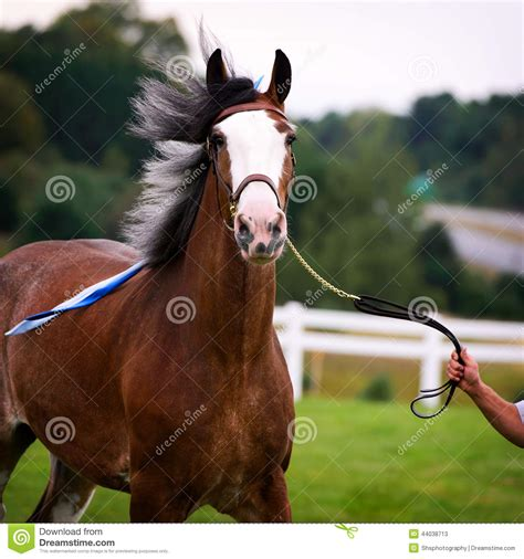 horse outside horse in harness outside in a field stock photo image