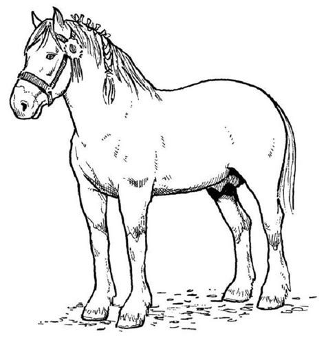Coloring Pages Of Real Horses | real horse coloring pages az coloring pages