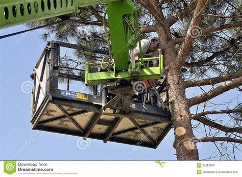 dawson v cherry tree machine chop the tree editorial image cartoondealer 77255088