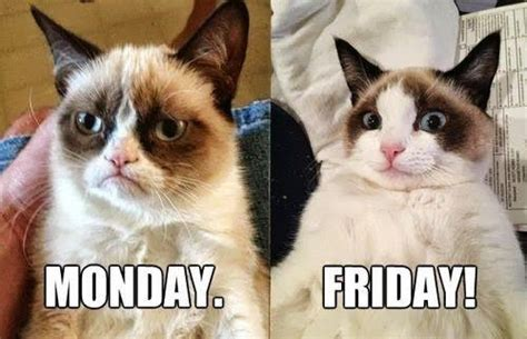 Friday Cat Meme - grumpy cat monday vs friday flickr photo sharing