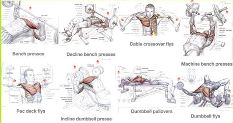 is bench press the best chest exercise best chest exercises for mass training for size all bodybuilding com